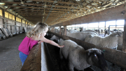 Visit WVU's Animal Sciences Farm on Oct. 6 for Family Day at the Farm.