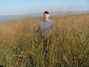 WVU professor Jeff Skousen is pictured with biofuel grasses on a reclaimed mine site.